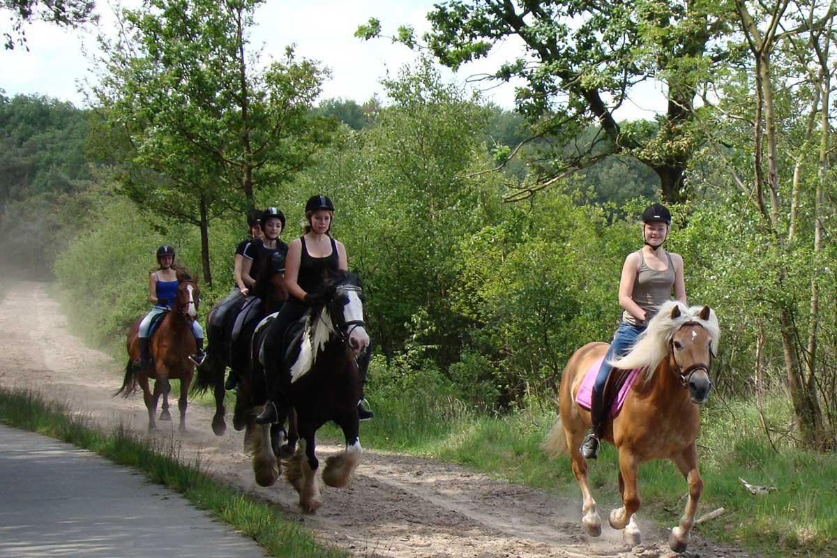 paardenvakantie-drenthe1